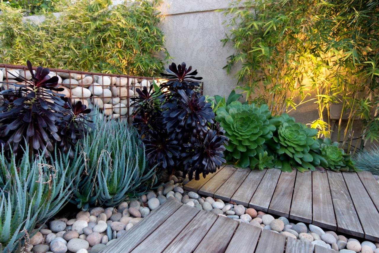 Modern Low Water Garden 5 Drought Tolerant Landscaping Ideas