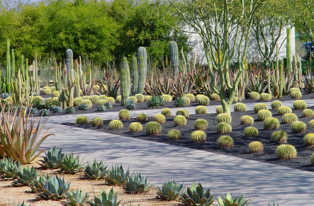 Modern Low Water Garden 5 Drought Tolerant Landscaping Ideas